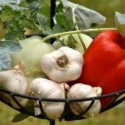 Kertészkedés a Holddal A növények asztrológiai besorolása Artemisz Asztrológia Debrecen